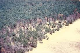 oak wilt damage.jpg