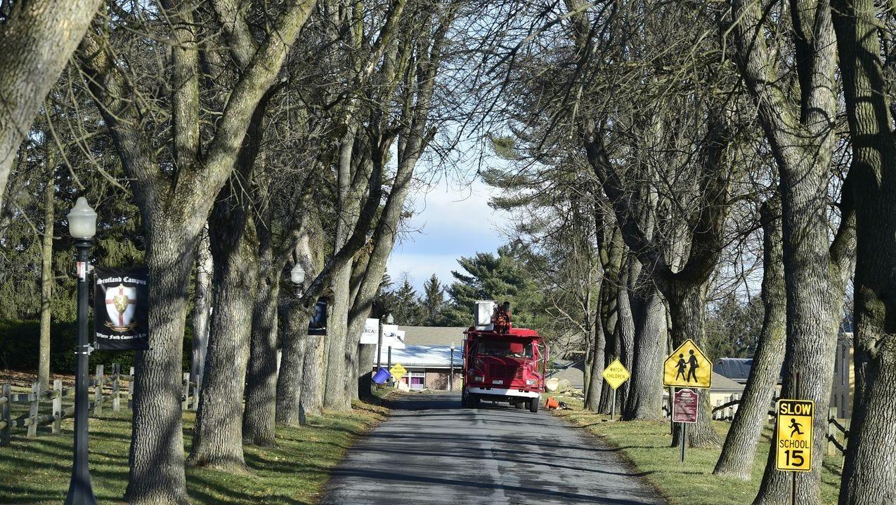 scotland campus ash tree death.jpg
