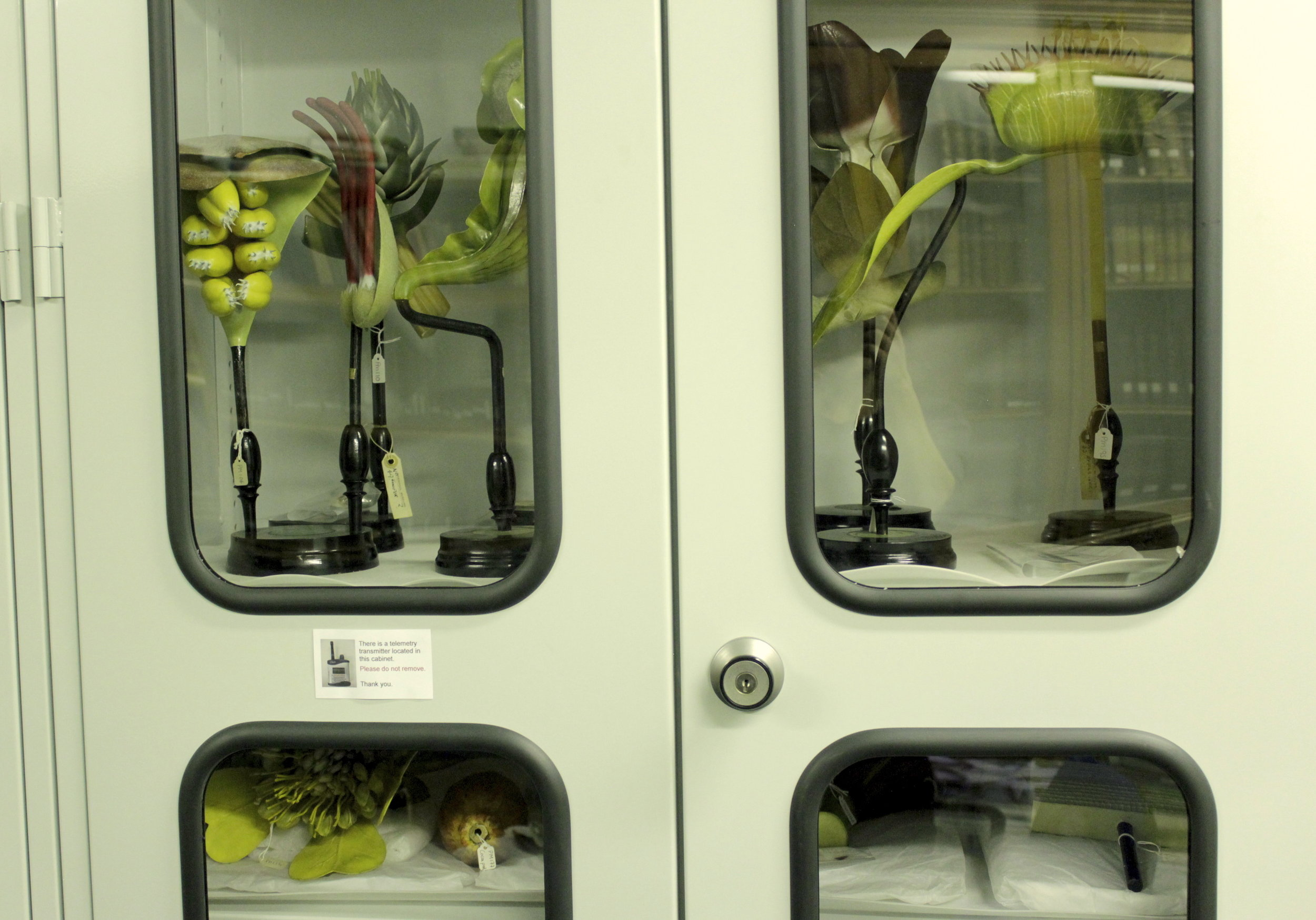 Brendel botanical models at the World Museum, Liverpool