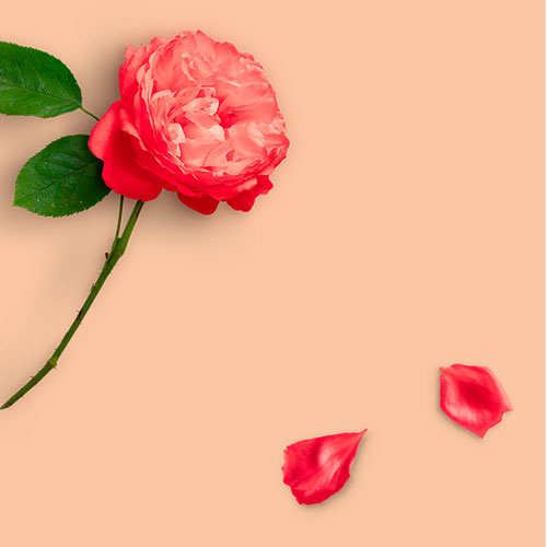 Website---Image-with-peony-and-petals.jpg