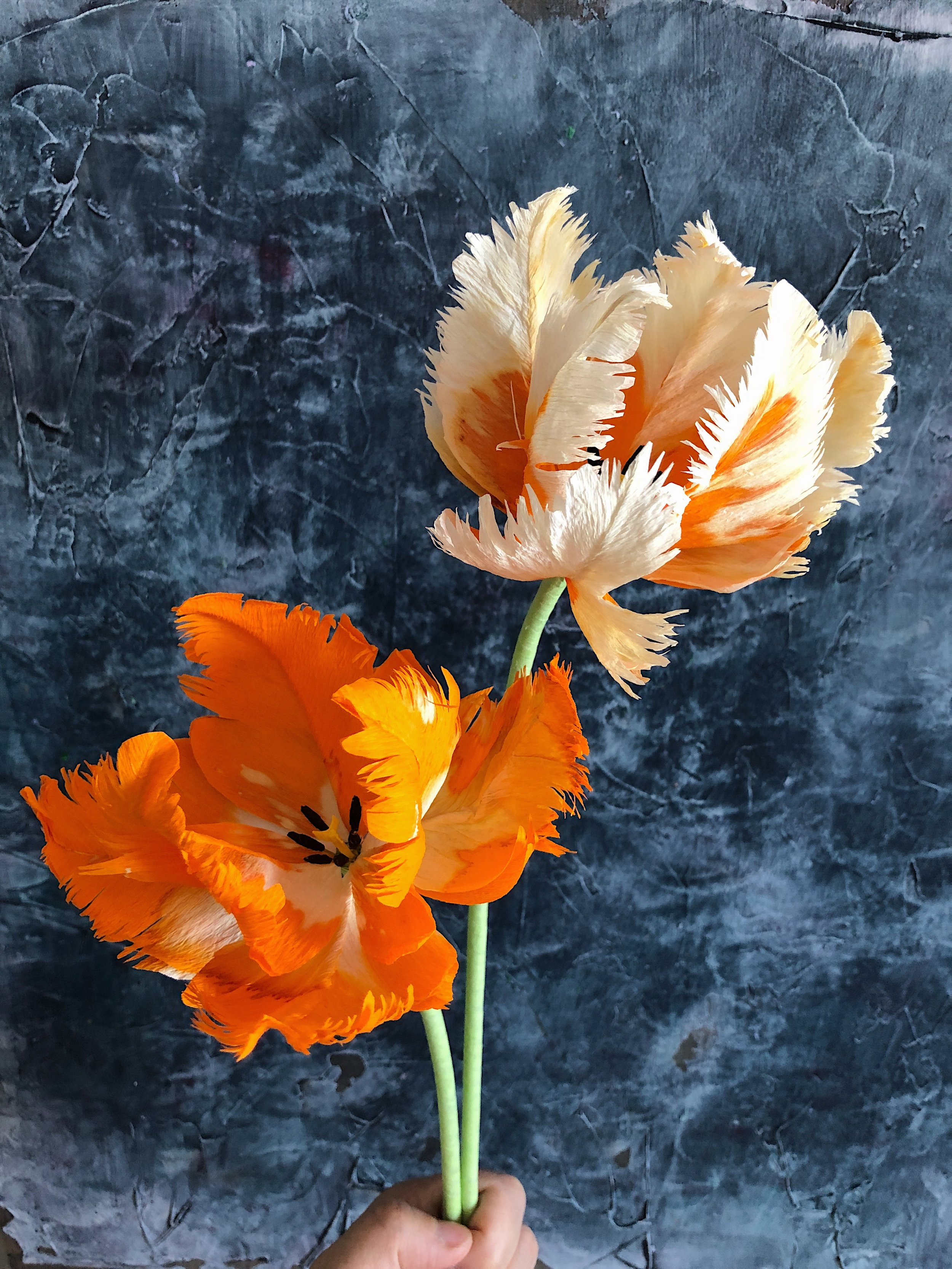 Crafted to Bloom - Crepe paper parrot tulipsJPG.JPG