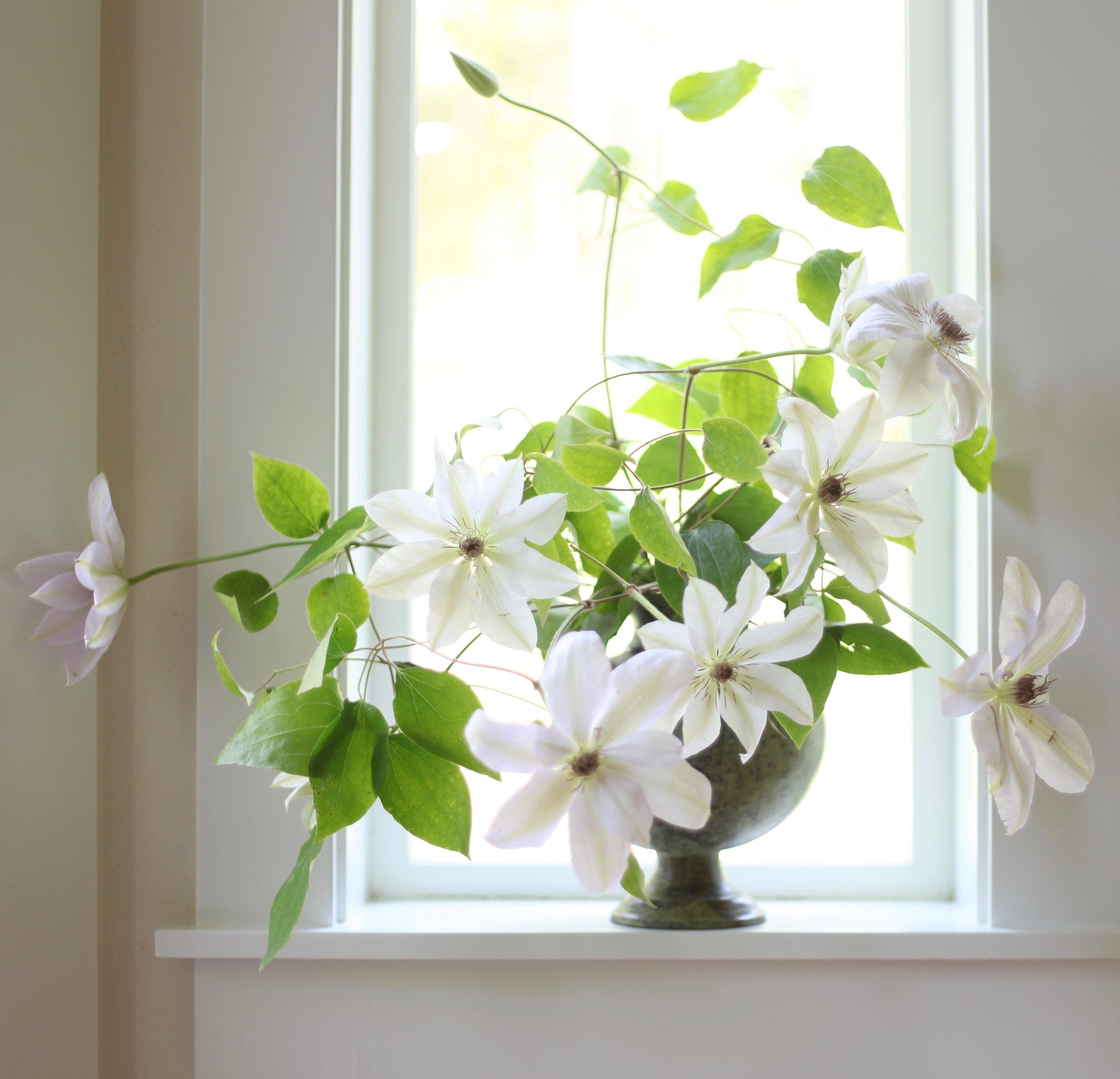 Flirty Fleurs Clematis in Green Vessel.jpg