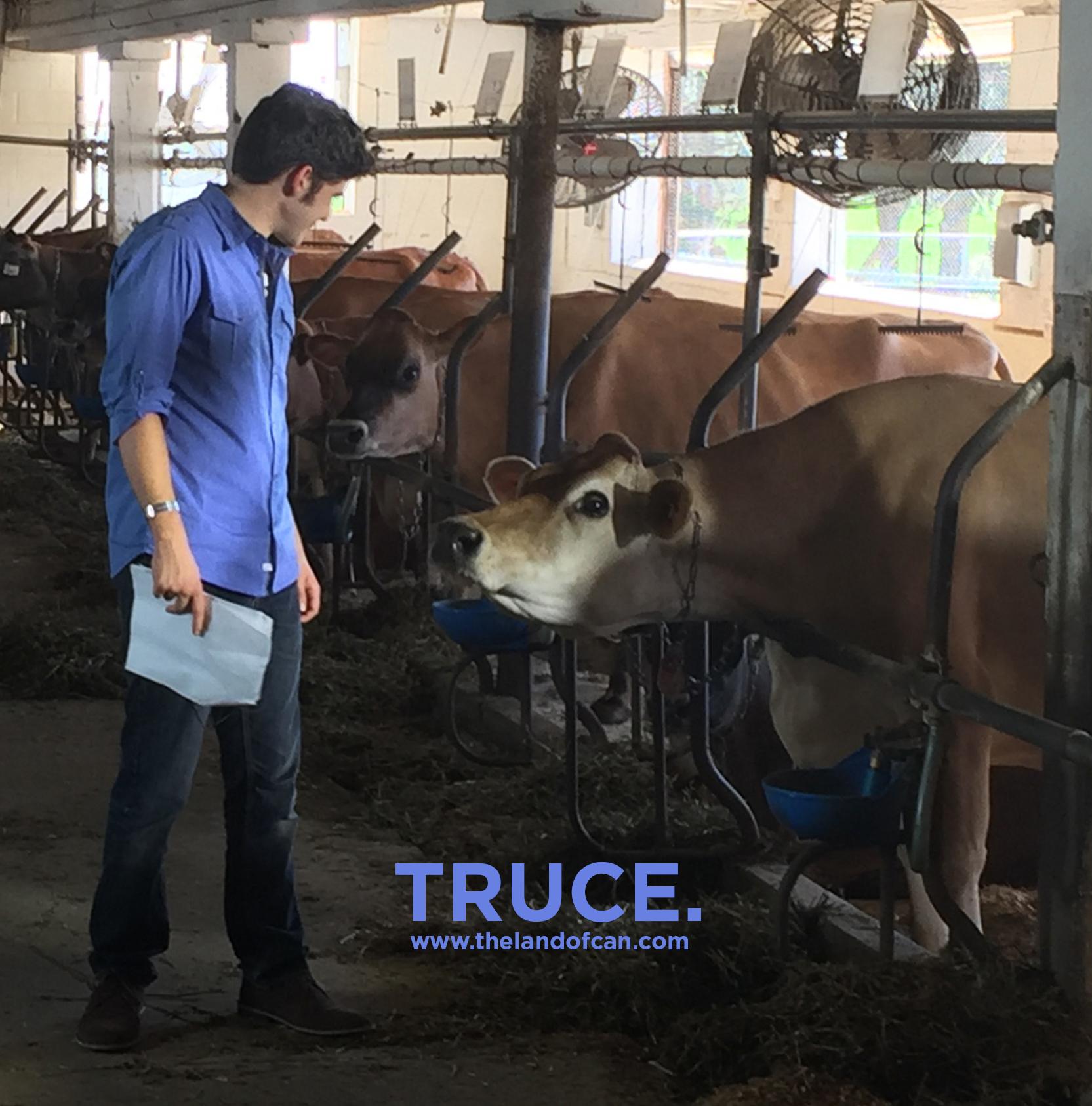Wednesday cow.jpg