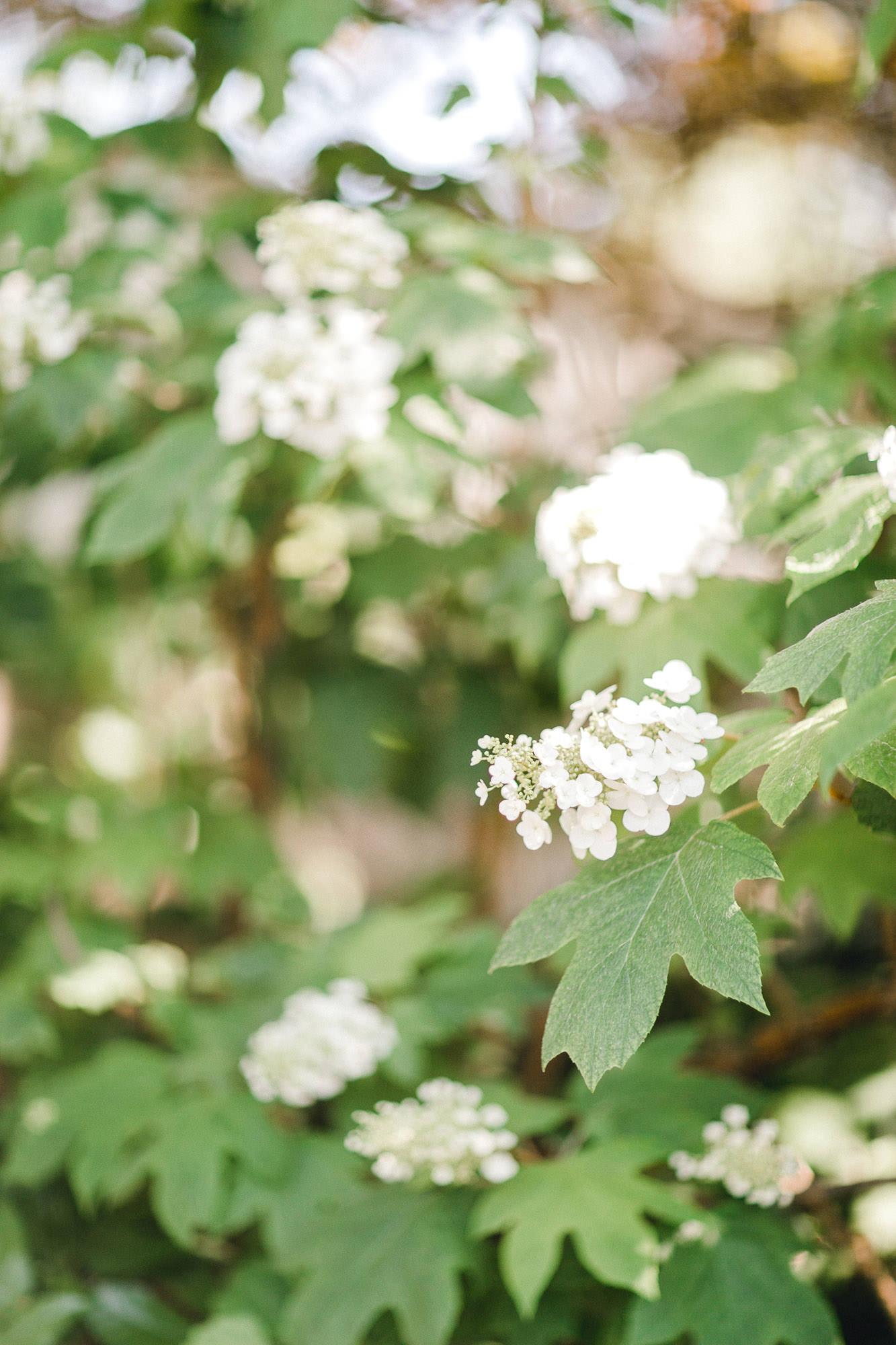 addie-michael-dallas-arboretum-weddings0002.jpg