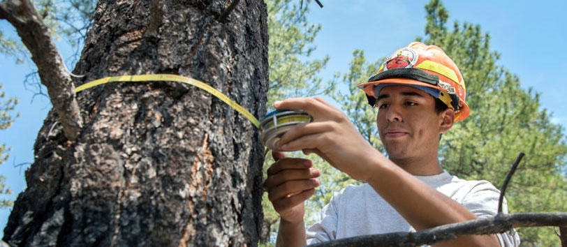 Eddie Martines, 17, of Ojo Caliente measures the circumference of a ponderosa pine in El Rito Ranger District. He works for Forest Stewards Guild and is collecting data for the U.S. Forest Service.  Eddie Moore/Albuquerque Journal