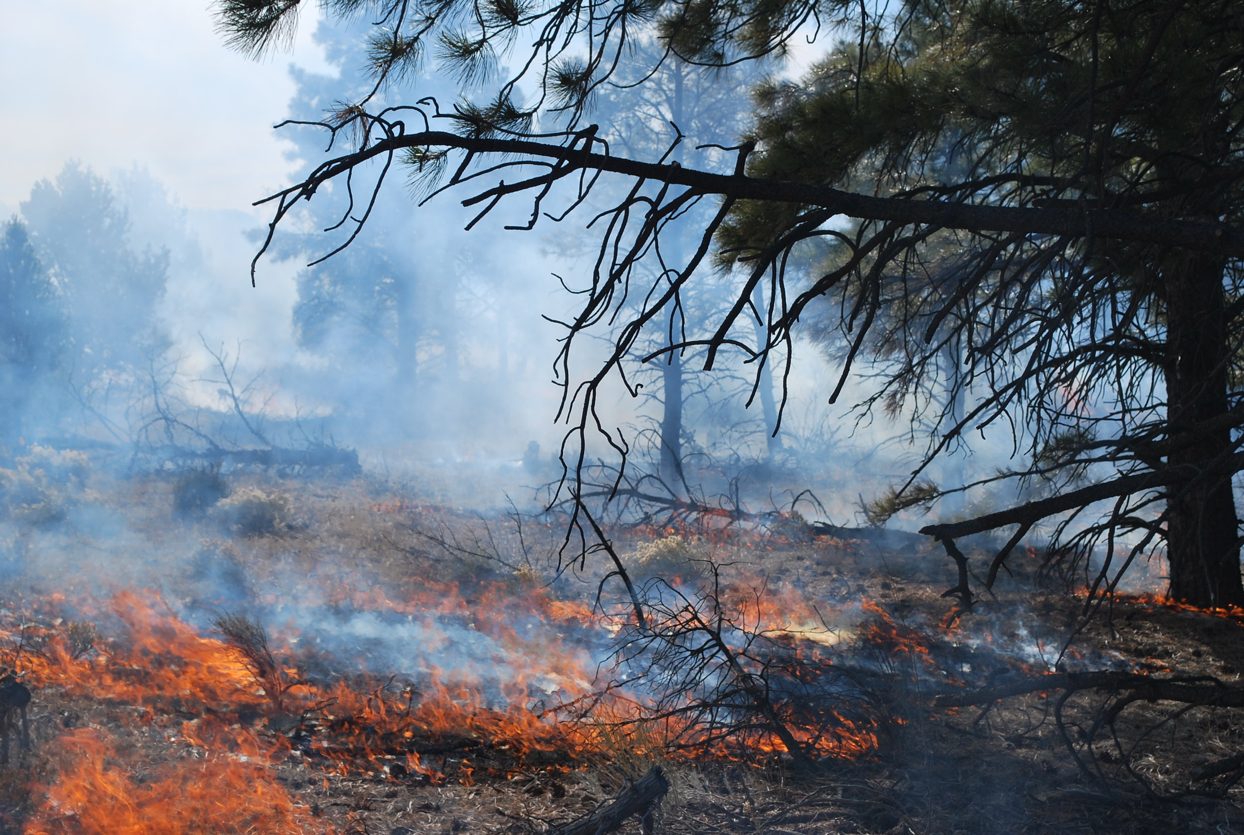 Photo: Eytan Krasilovsky, prescribed fire, NM.