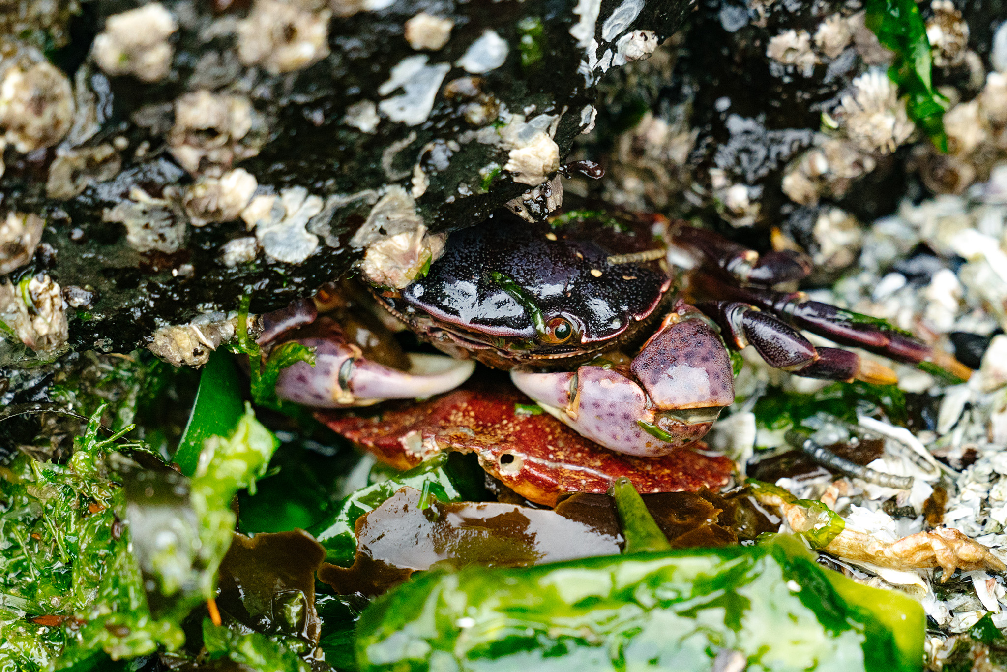 Best tide pools on Whidbey Island