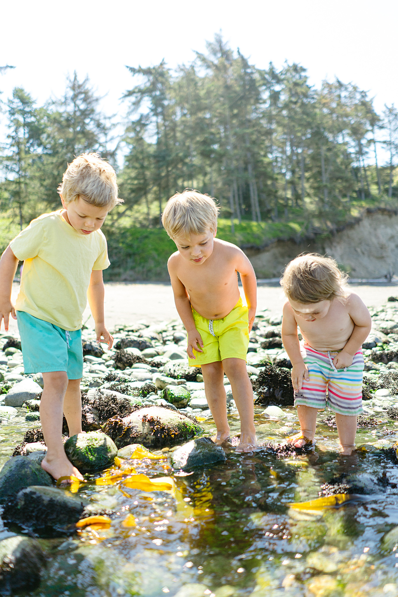 Best Beaches for Tide Pooling on the Puget Sound