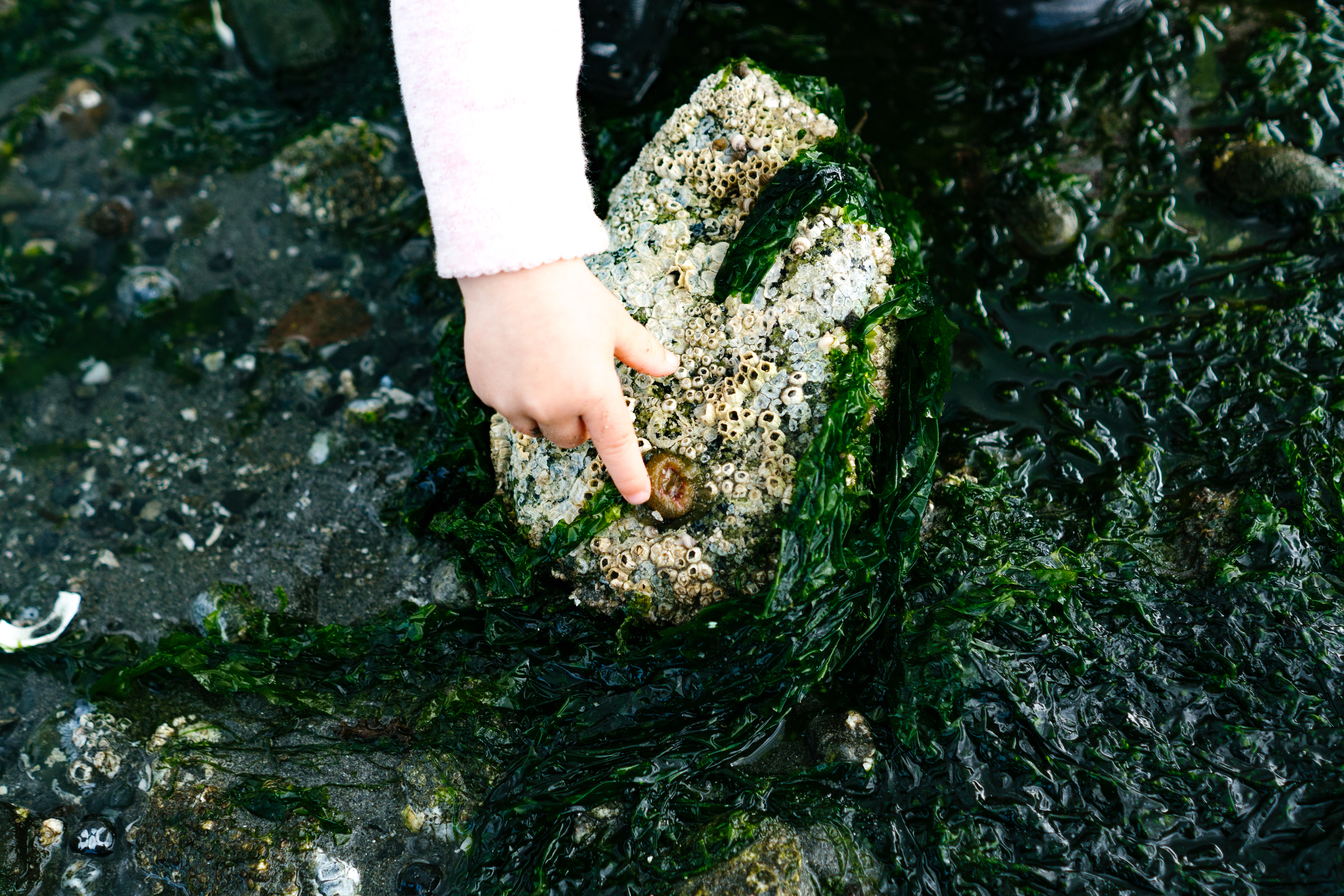 Seattle Tide Pool Family Adventure Portrait Photographer