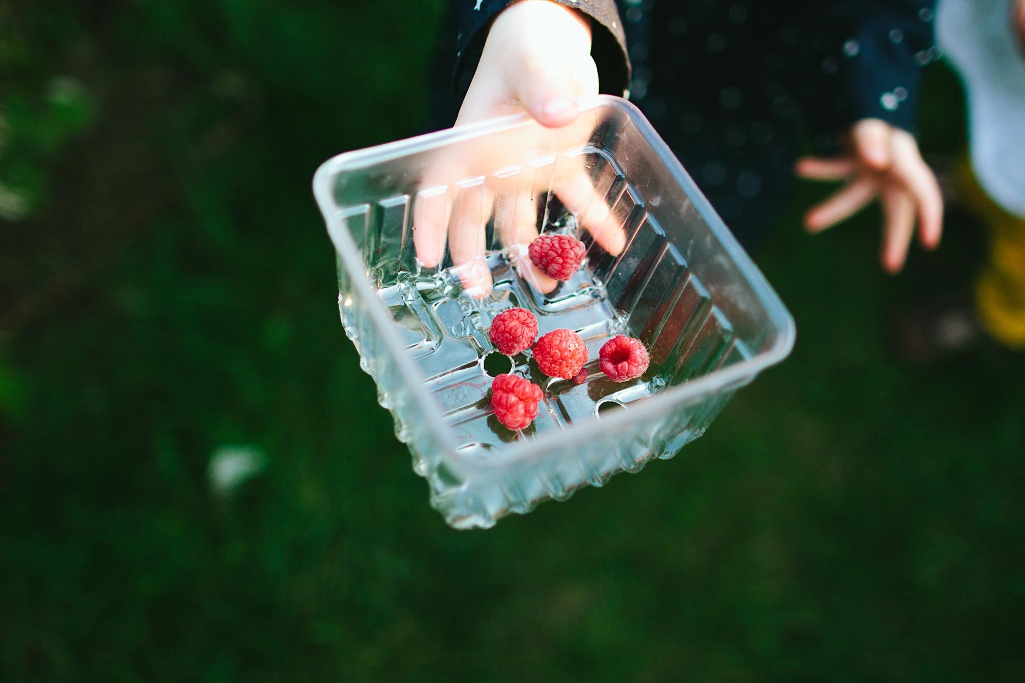 Picking berries near Seattle, Washington