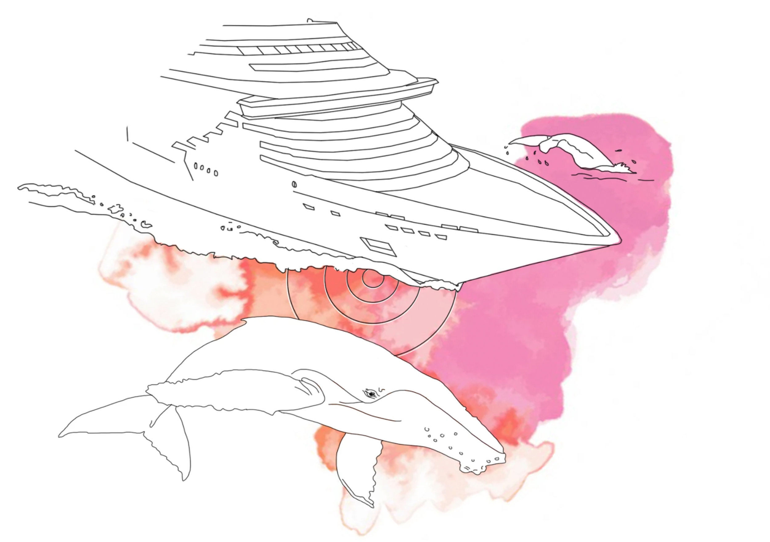 - Humpbacks are fishing under dangerous and noisy shipping lanes.