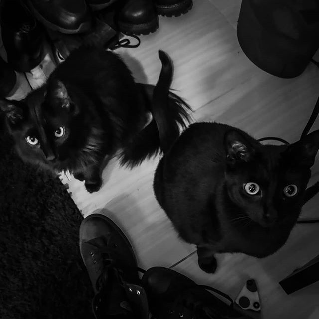 Doomy & Gloomy 🖤 #catsofbands #grendel #doomy #gloomy #cats #blackcats #pets #bandpets #studiocats #gothcats #familiars #instacats #catsofinstagram #darkness #petsofinstagram