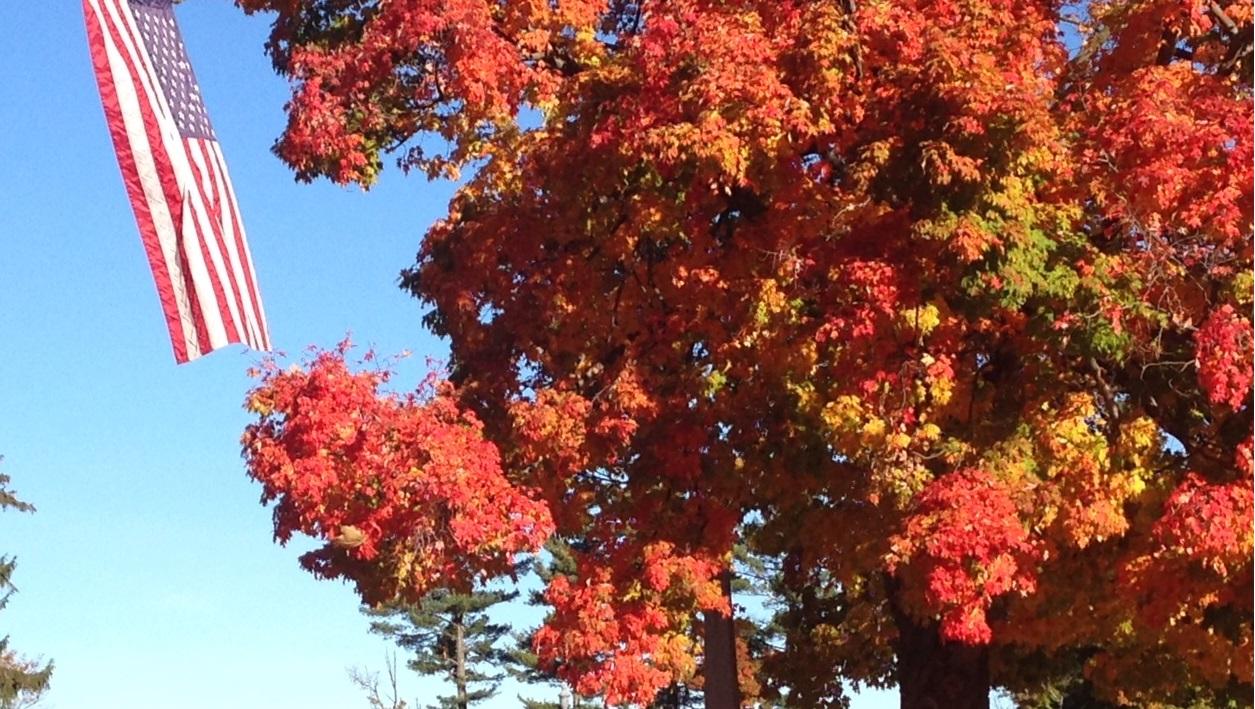 Autumn Leaves in Bridport.jpg