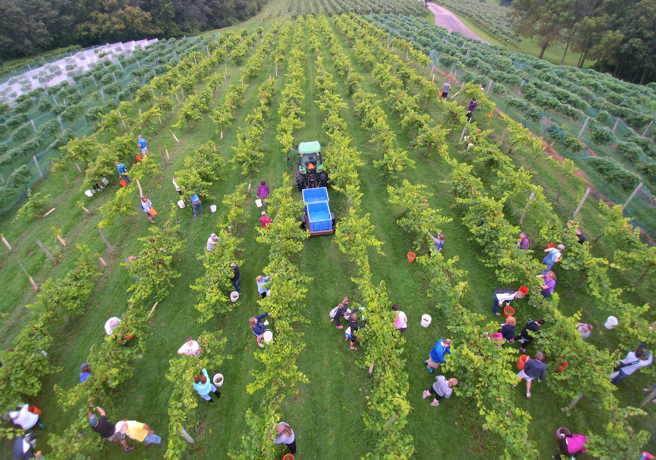 Summerset Winery Harvest Drone 2.jpg
