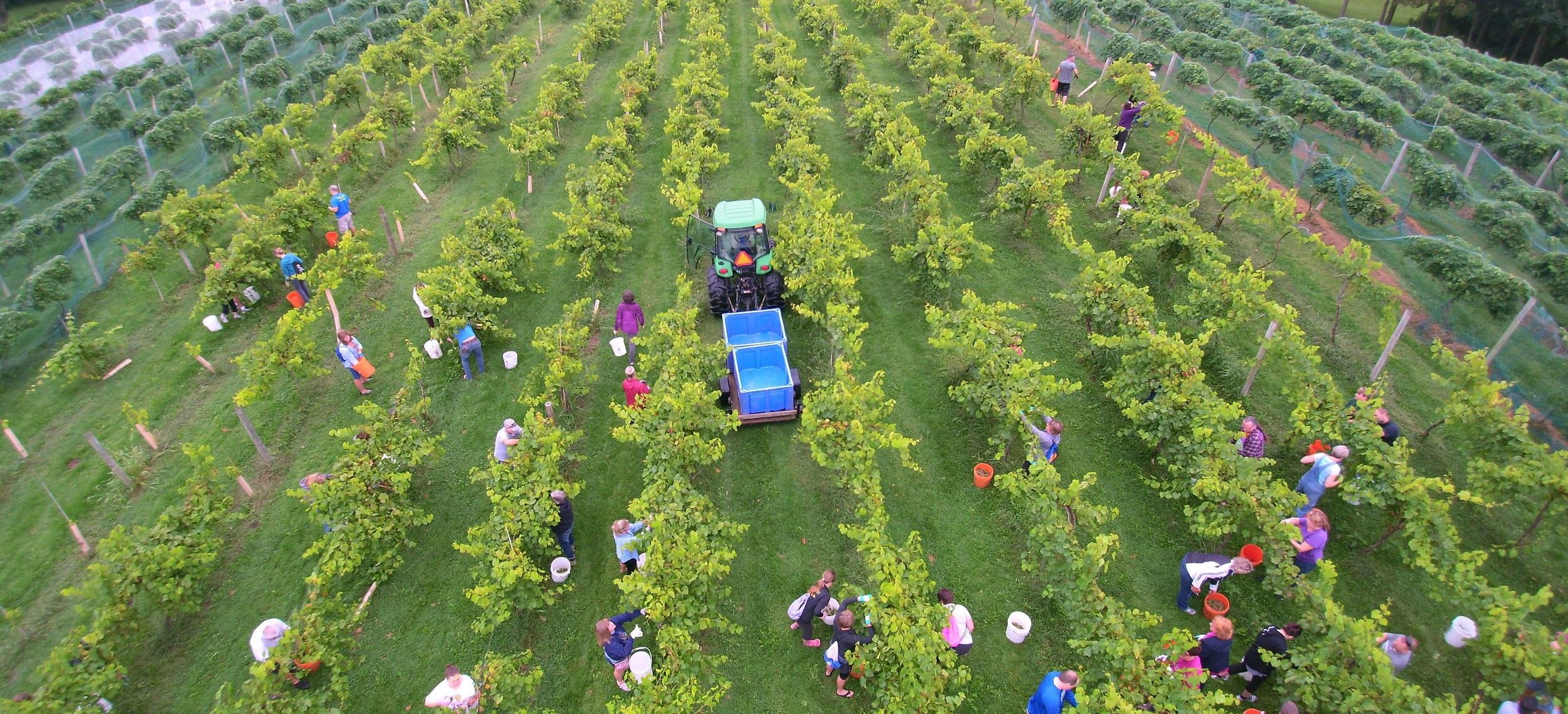 Summerset Winery Harvest Drone 2.jpg