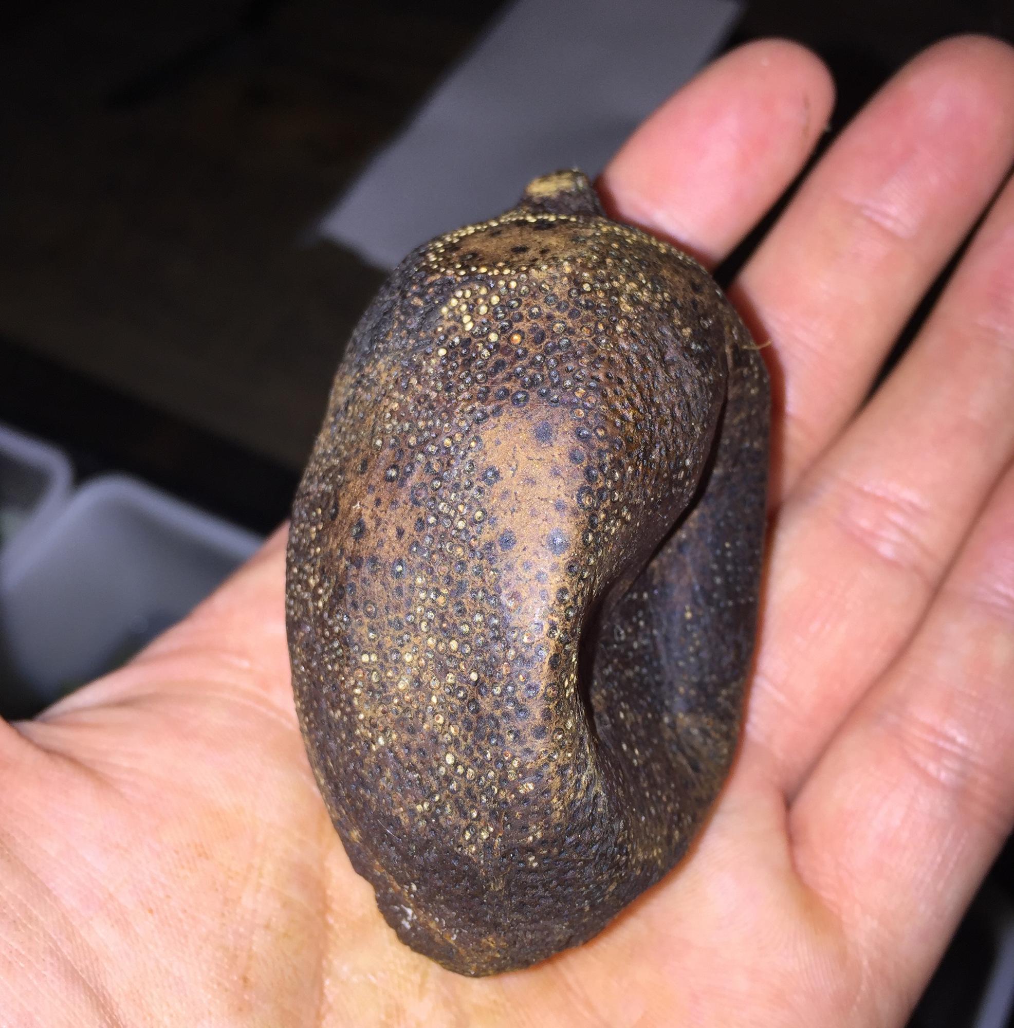 Black lemon at Bokan