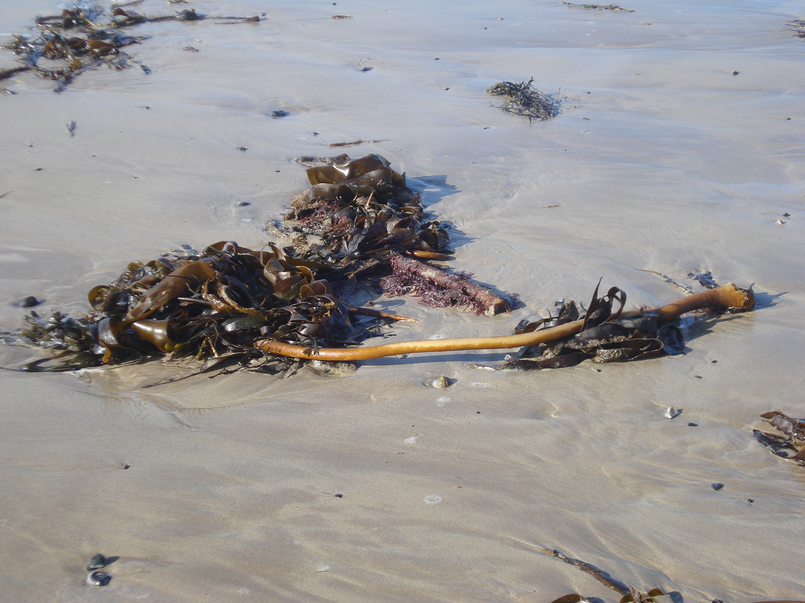 Portballintrae. Seashore diaries