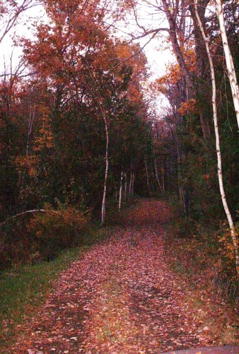 more woods.jpg