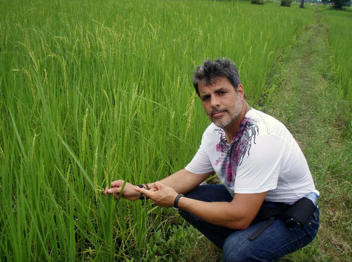 Learning to pick rice cambodia.jpg