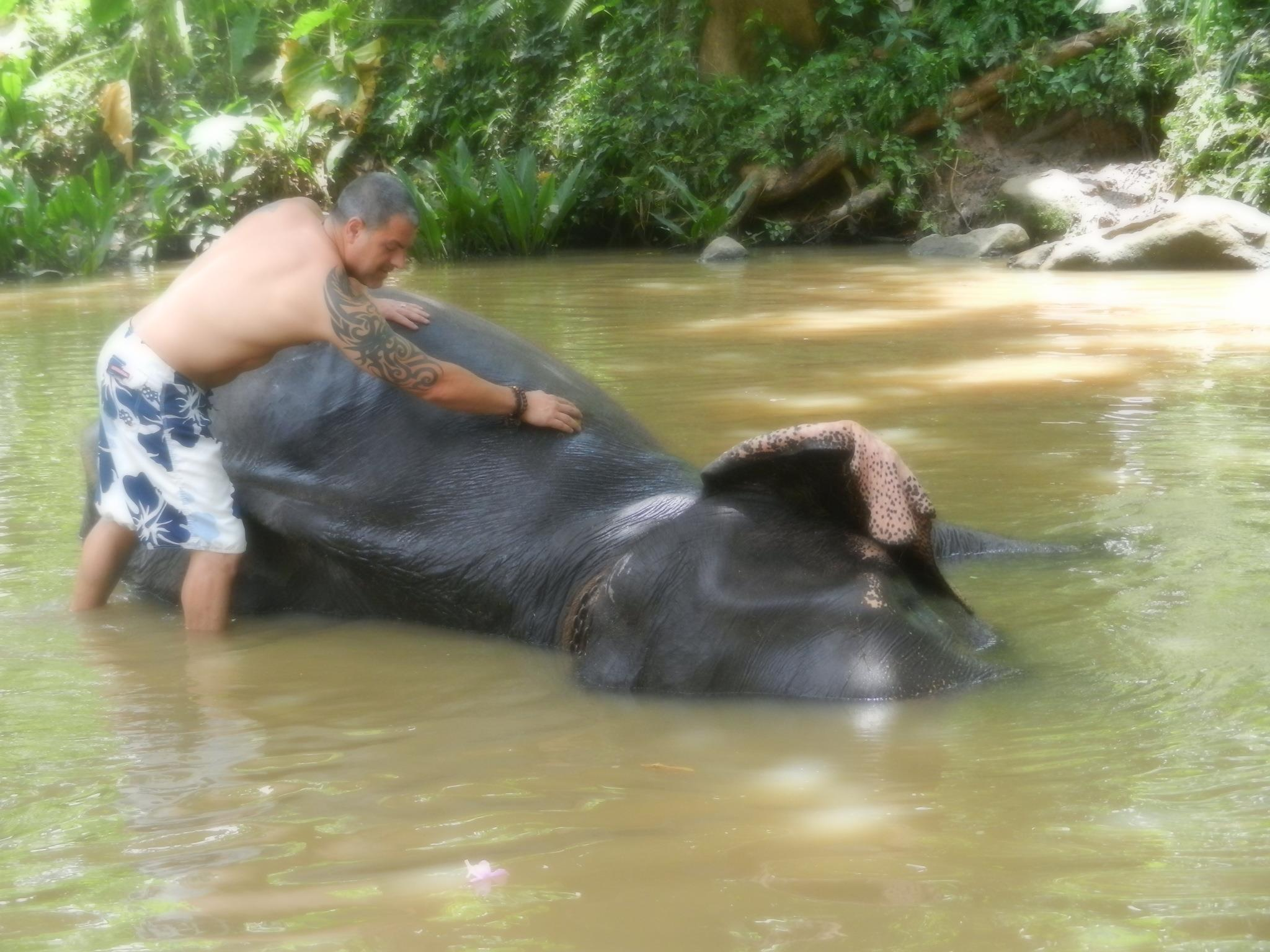 bathing elephant.jpg