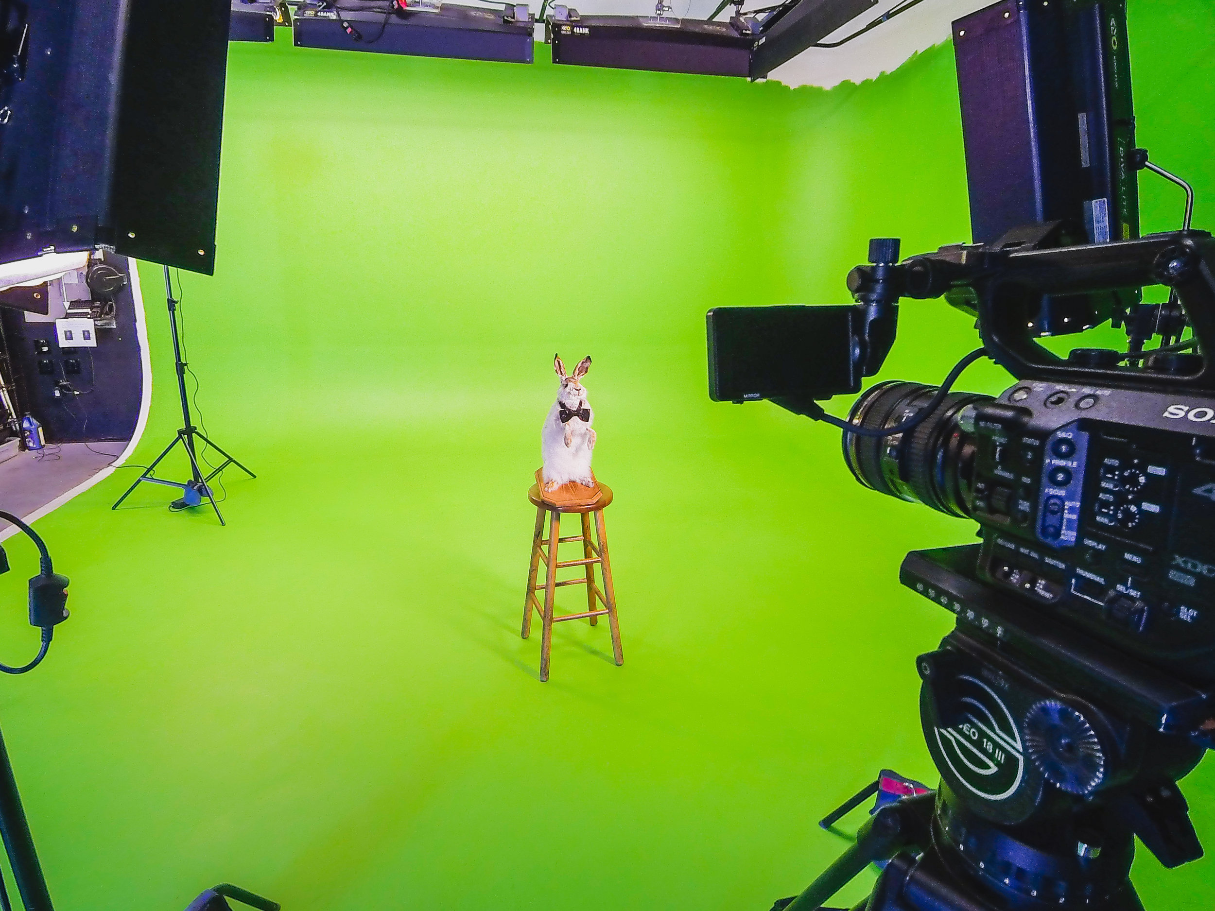 Mr. Muffin prepares for his closeup in our high end studio.