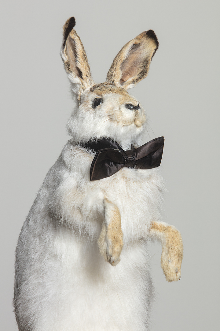 Mr.Muffin is a factory bunny from Detroit, MI. Upon moving to Austin in 2013, he was adopted by Originator Studios and insists on having a cameo in every shoot.