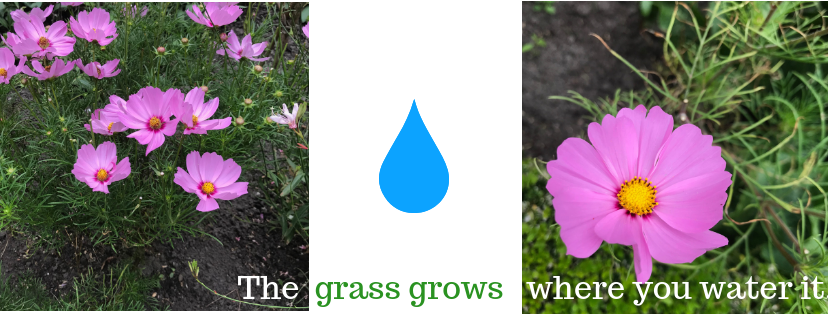 The grass grows where you water it..png