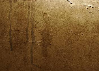 stains-mold-mildew-ceilings-walls-palmer-roofing-sonoma-county.jpg
