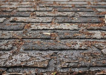 missing-cracked-curled-shingles-palmer-roofing-sonoma-county.jpg