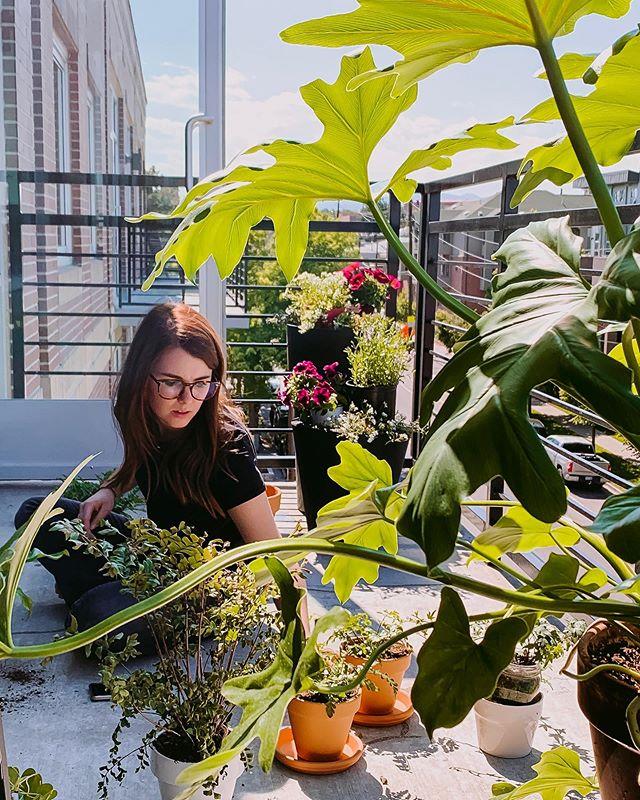 Plants on plants on plants. No matter the state. #denverplants