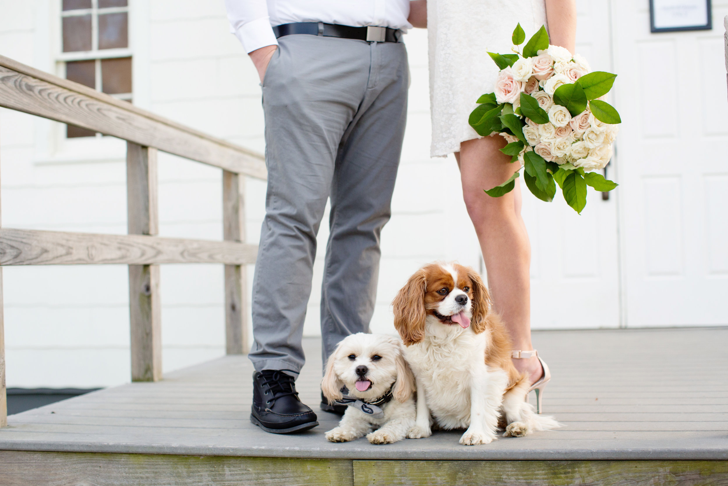 dogs at beach engagement shoot at feet of couple while bride to be holds blush and ivory rose bouquet wearing bcbg white sequin dress