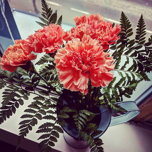 A little carnation celebration 💐 - #fridayfeeling #flowers #fromfriends #dayclass #appreciation