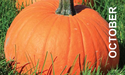 KQP_PC_Oct_Pumpkin_OCT.png