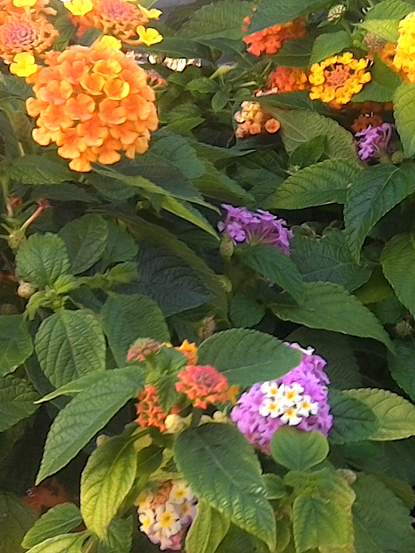 KF&GM_annual_Flower_web.jpg