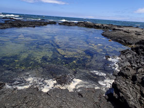 WP004: Tidepools with slimy patches and foam on surface of water
