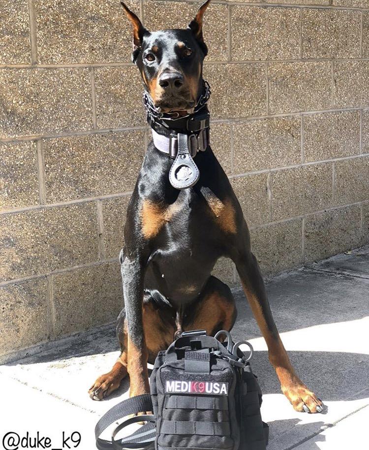 9/18/18 - K9 Duke of the Menlo Park Police Department, Ca