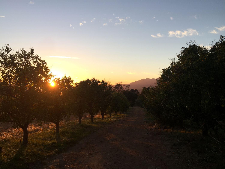 Sunset_Trees.jpg