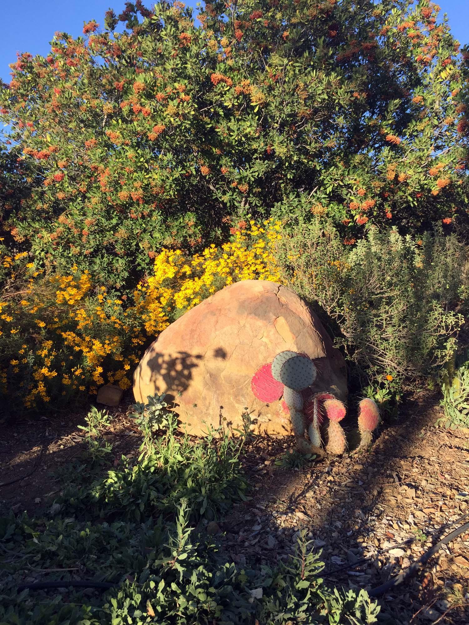 Cactus_rock2.jpg