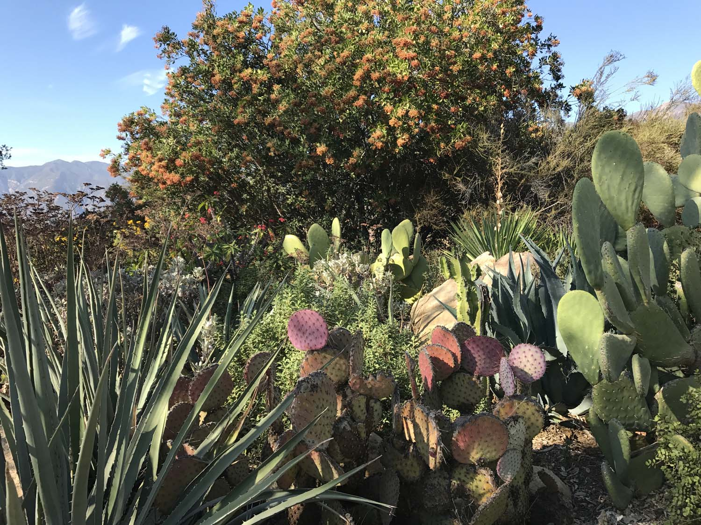 Cactus_view.jpg