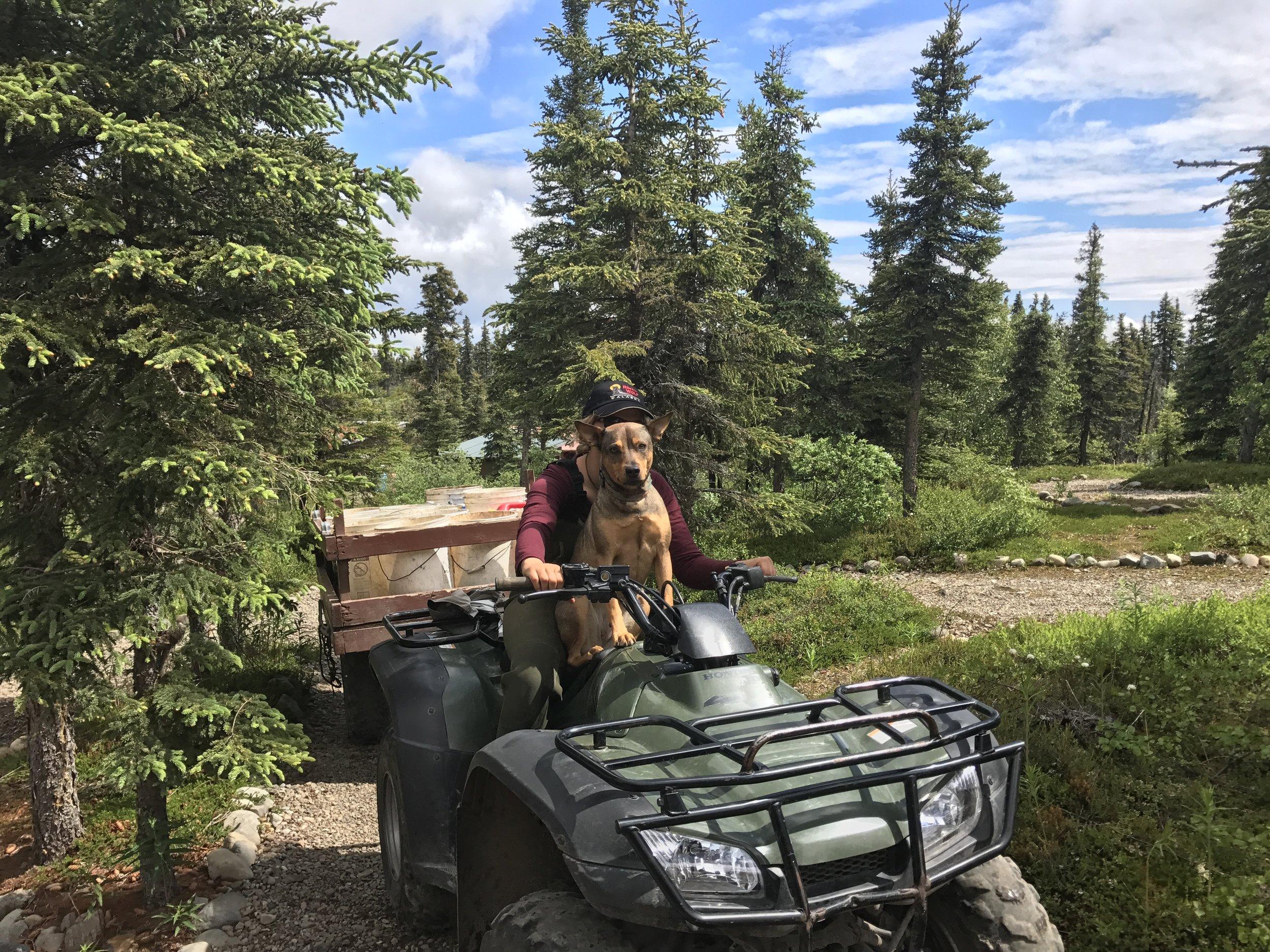 Lodge dog Django, helping keep the grounds beautiful.