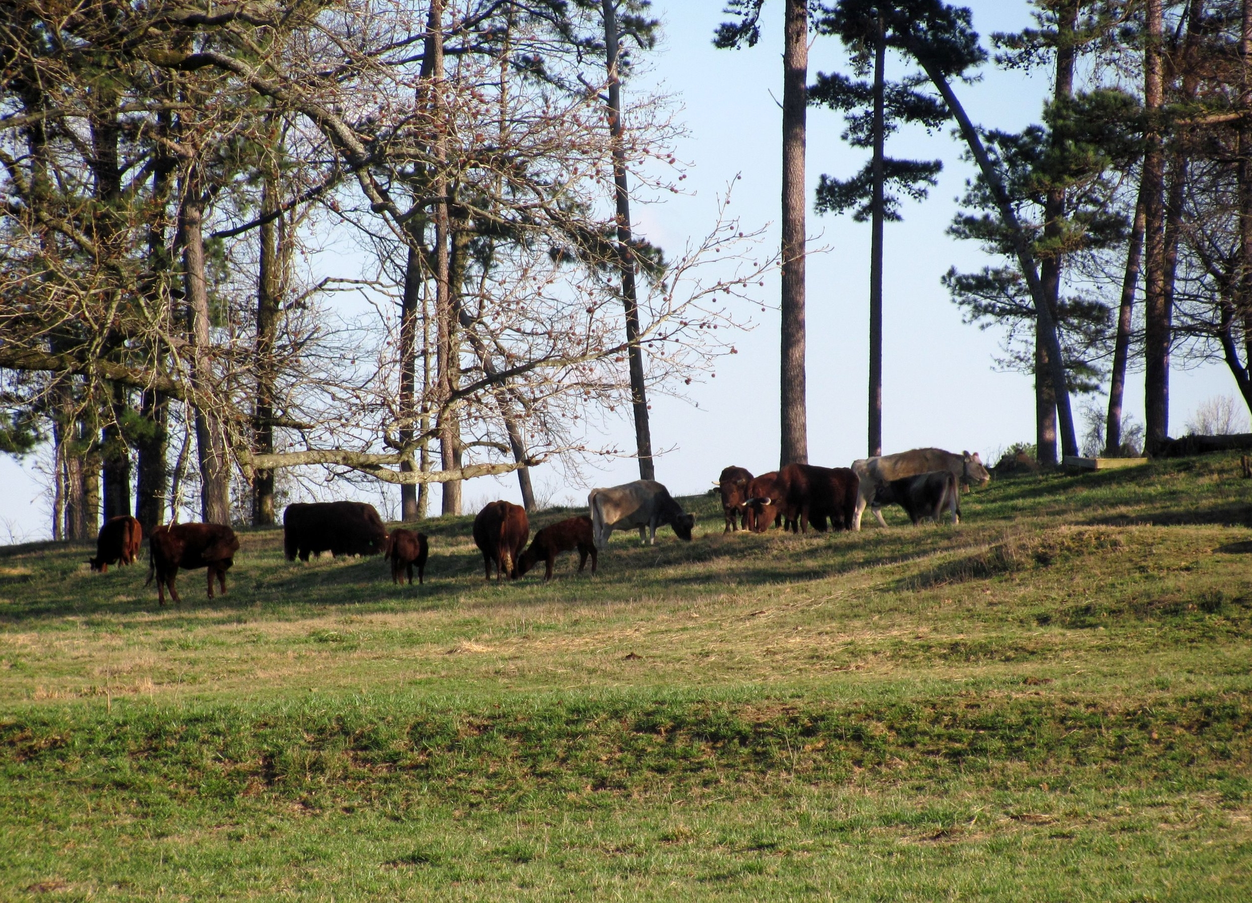 Early Spring Grazing