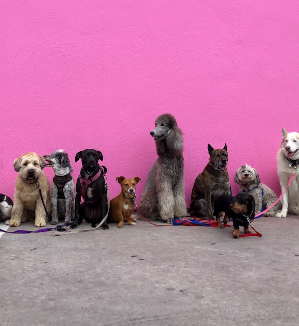 Enjoy the cutest colleagues ever. - Become a pet care specialist.