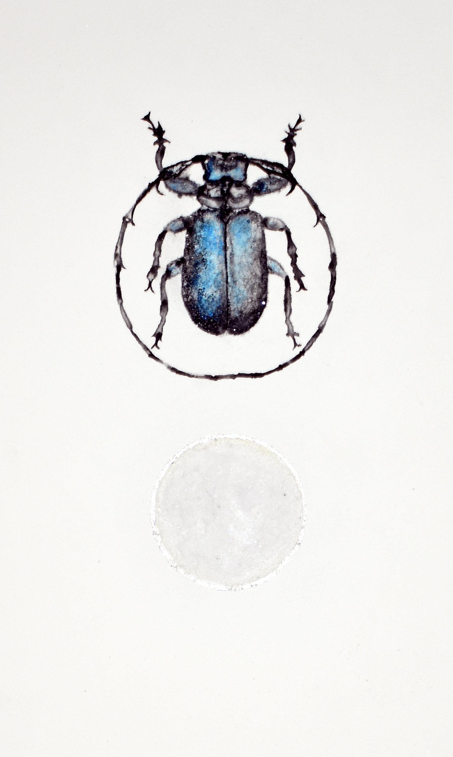 Beetle01.jpg