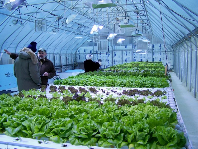 2in+the+greenhouse.jpg