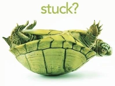 Turtle-Stuck.jpg