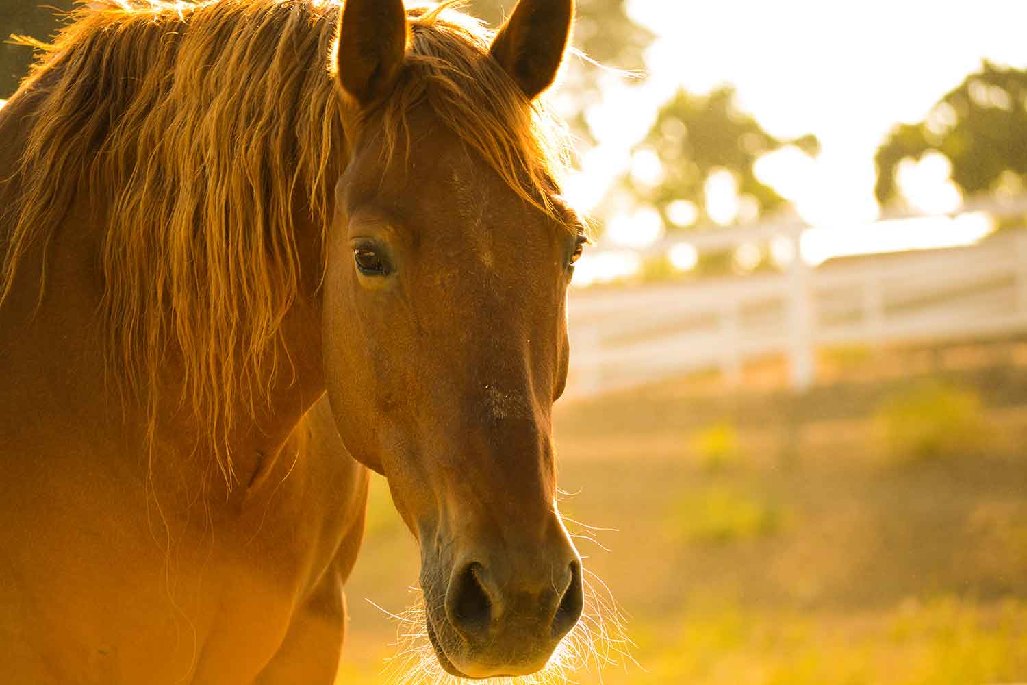 Ojai Valley Trail Riding Company offers sunset horseback riding in Ojai.