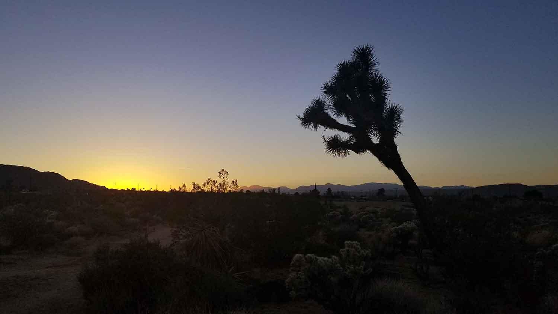 Sunset in Joshua Tree.