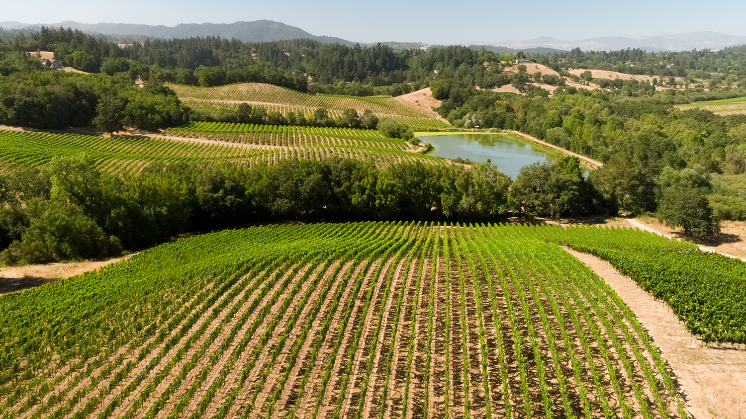 A selection of Sonoma County wineries provide exclusive experiences and benefits to Farmhouse Inn guests.