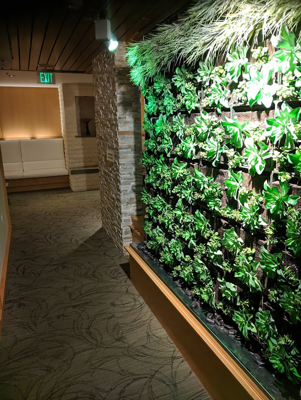 The beautiful plant-filled accent wall, located at the entrance to the treatment rooms.