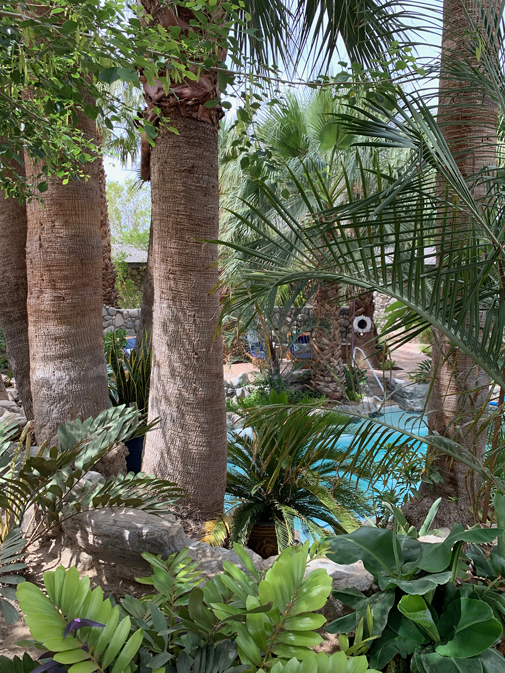 A glimpse of the pool through the lush trees.